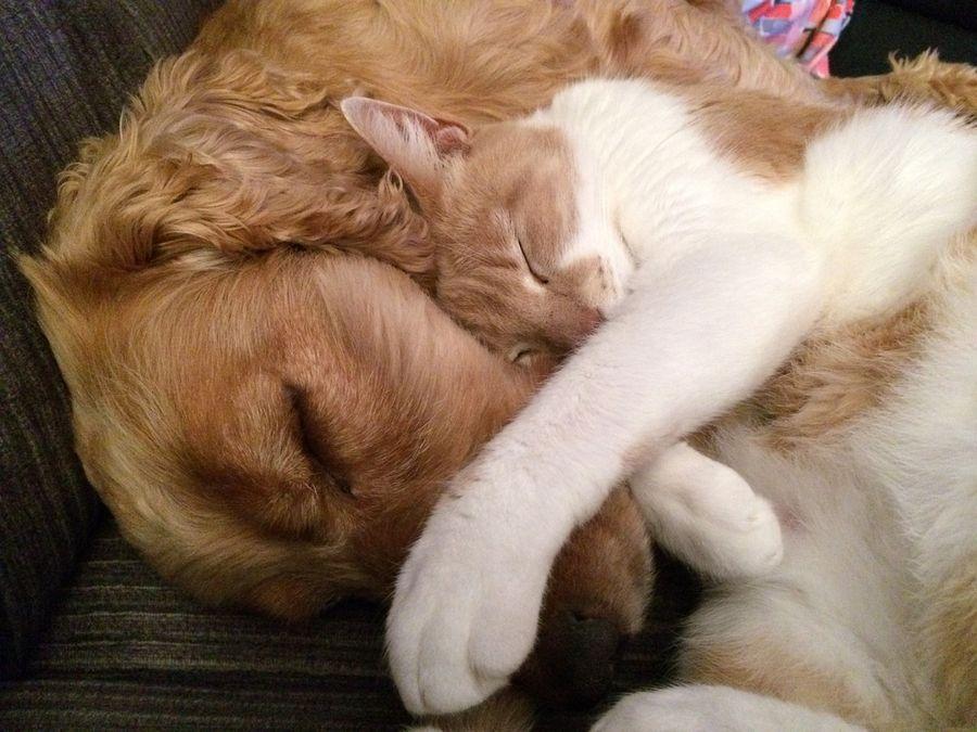 Kot z psem